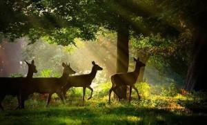 doe,,dear,planet,earth,doe,animal,deer,forest-00fd332237b429d168c1990b01d007a6_h