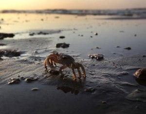 crab-bp-oil-spill-lg