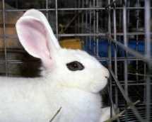 Against-Animal-Testing-against-animal-testing-7992670-900-720