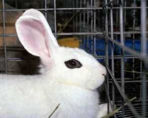 Against-Animal-Testing-against-animal-testing-7992670-900-720
